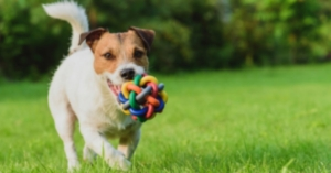 Why Dog Toys Are Important
