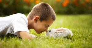 Preparing For A New Pet Rabbit