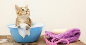 Bathing Your Pet Cat