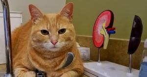 FAQ Feline Kidney Disease