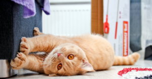 Cat Scratching-Nuisance Or Necessity?