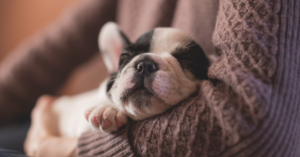 How to Help Your Puppy Sleep at Night